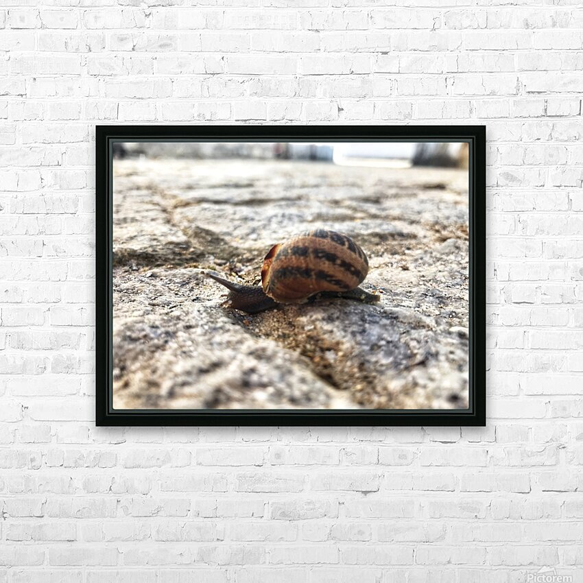 Little snail in the village of Portugal HD Sublimation Metal print with Decorating Float Frame (BOX)