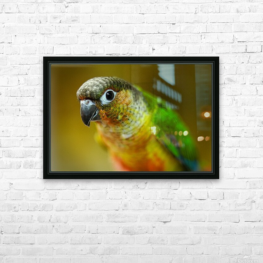Parakeet HD Sublimation Metal print with Decorating Float Frame (BOX)