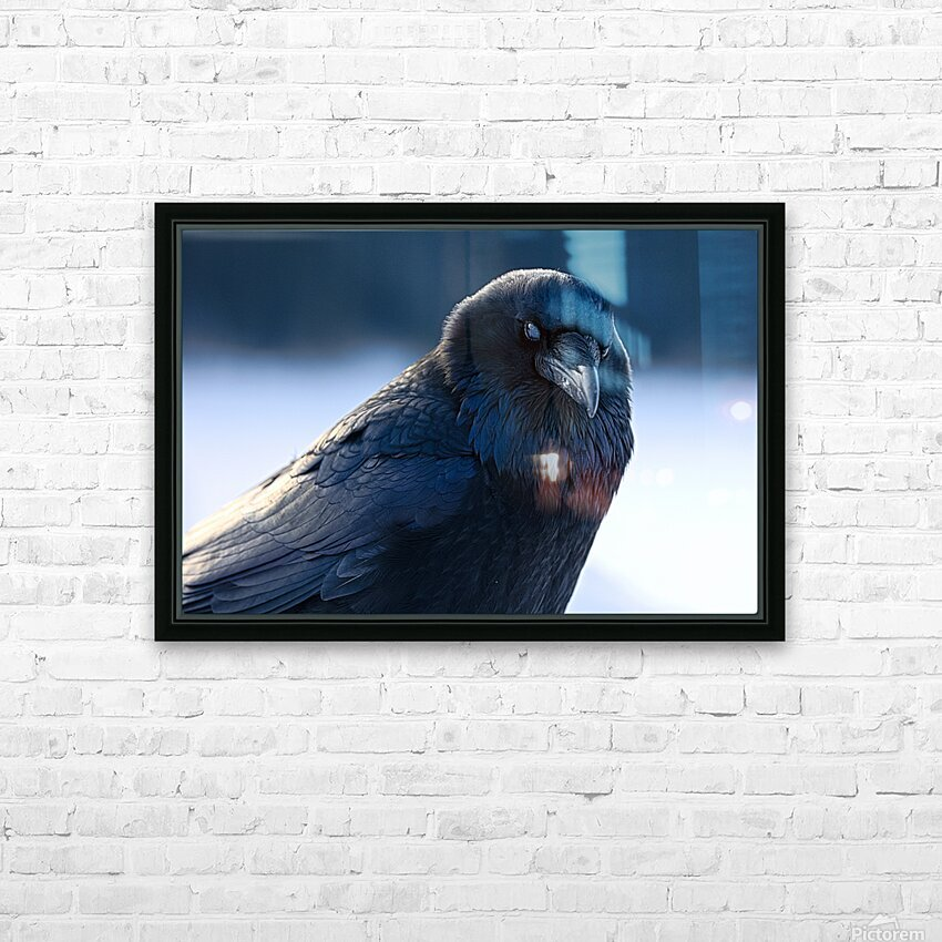 Raven HD Sublimation Metal print with Decorating Float Frame (BOX)