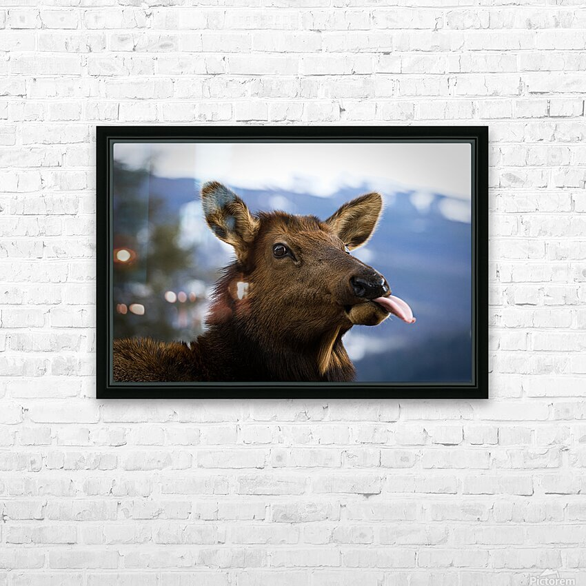 Cow HD Sublimation Metal print with Decorating Float Frame (BOX)
