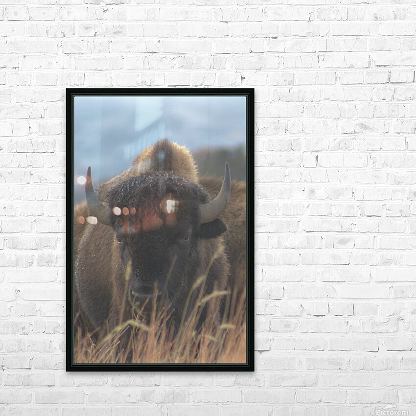 Wet Hair Dont Care HD Sublimation Metal print with Decorating Float Frame (BOX)