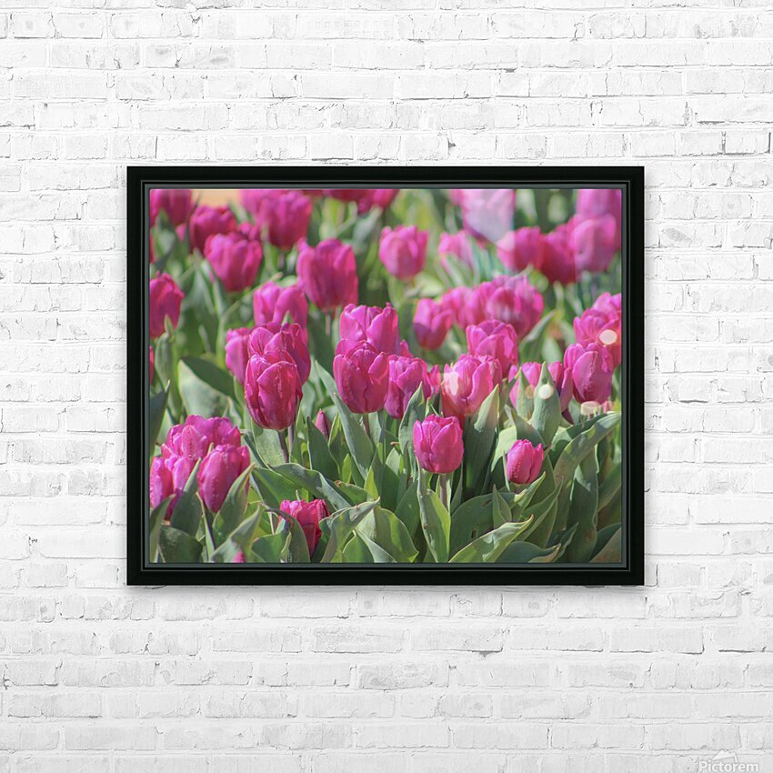 Fantasically Fuschia Tulips HD Sublimation Metal print with Decorating Float Frame (BOX)