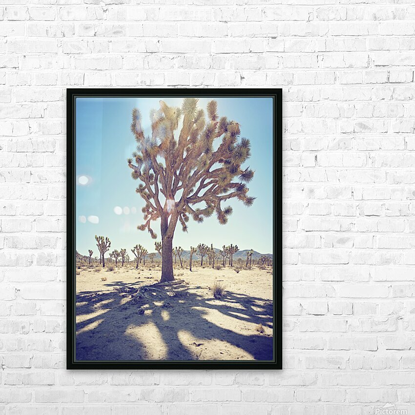 Joshua Tree National Park HD Sublimation Metal print with Decorating Float Frame (BOX)