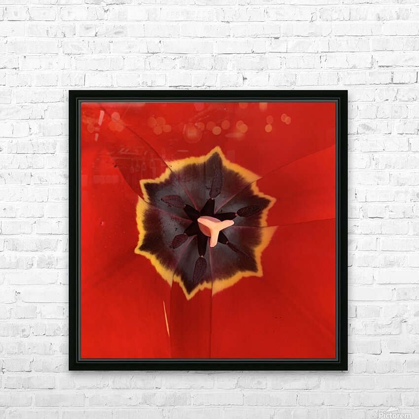 Treasured Tulip HD Sublimation Metal print with Decorating Float Frame (BOX)