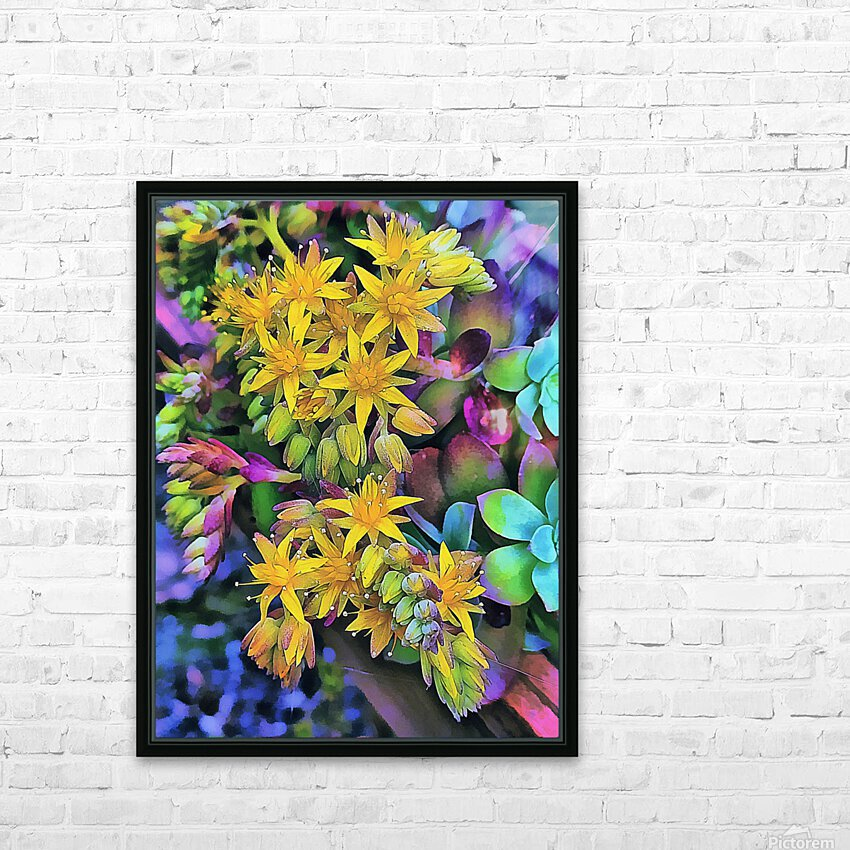 Echeveria Hybrid With Yellow Flowers HD Sublimation Metal print with Decorating Float Frame (BOX)