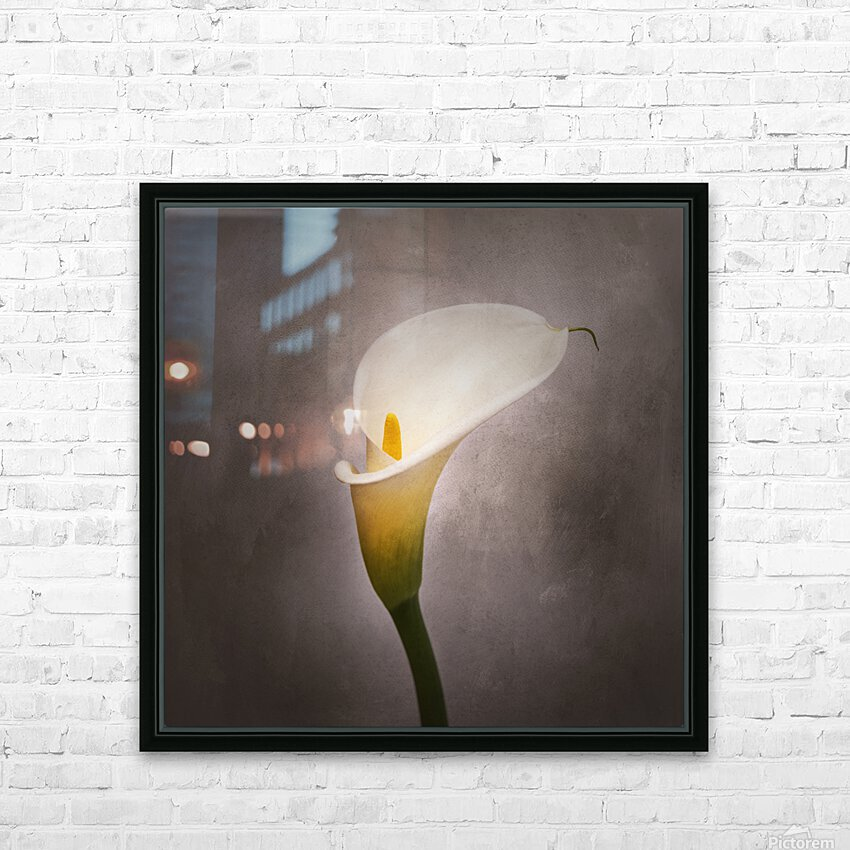 Graceful flower - Calla No. 4 | vintage style  HD Sublimation Metal print with Decorating Float Frame (BOX)