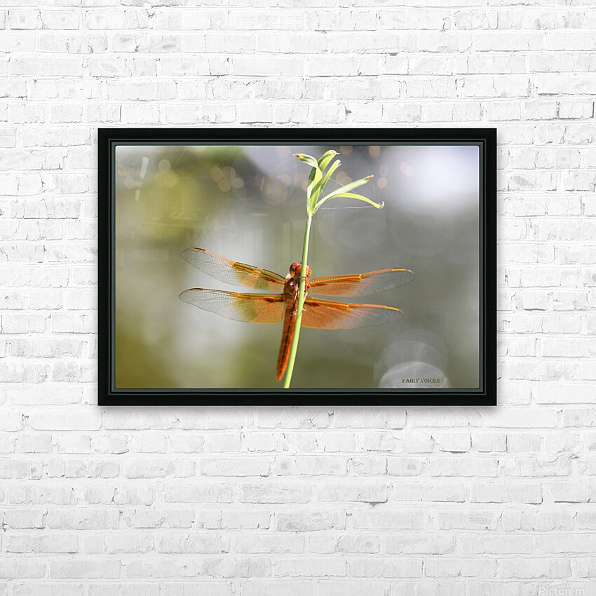 PEEK-A-BOO  Collection 1-4 HD Sublimation Metal print with Decorating Float Frame (BOX)