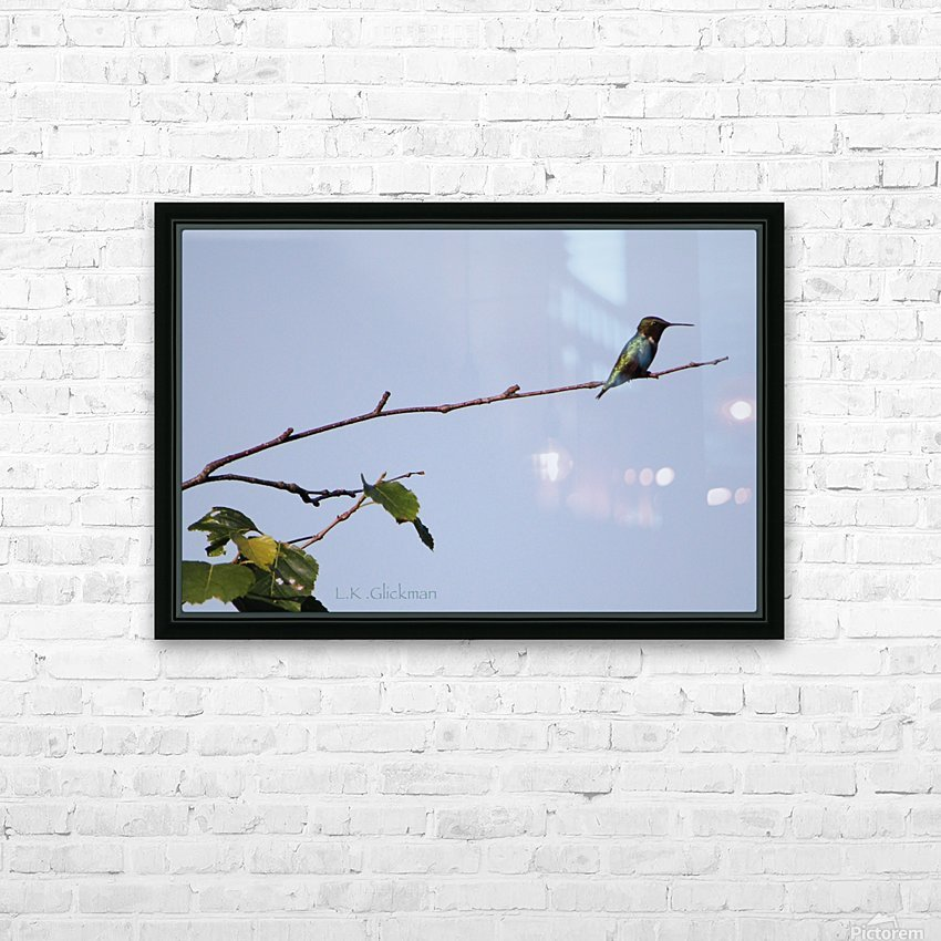 hummingbird 1 HD Sublimation Metal print with Decorating Float Frame (BOX)