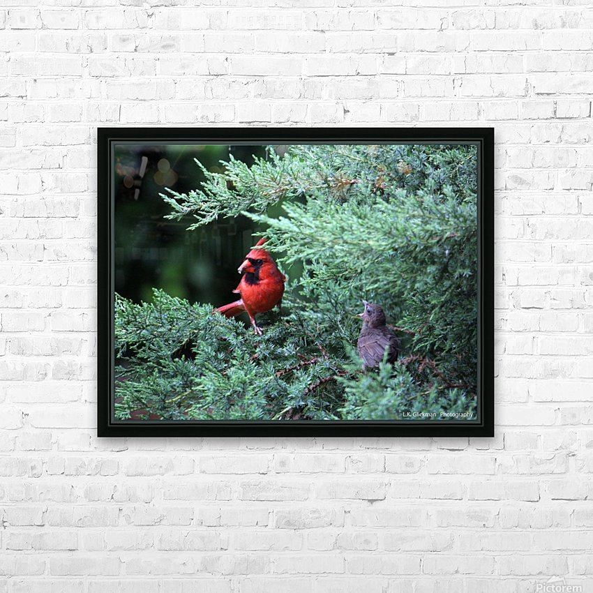 cardinal dad feed5 HD Sublimation Metal print with Decorating Float Frame (BOX)