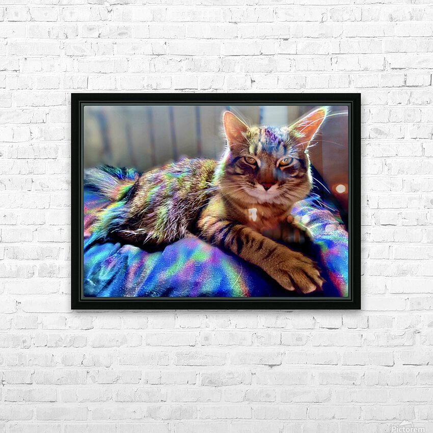 Rainbow Kitten Surprise  HD Sublimation Metal print with Decorating Float Frame (BOX)