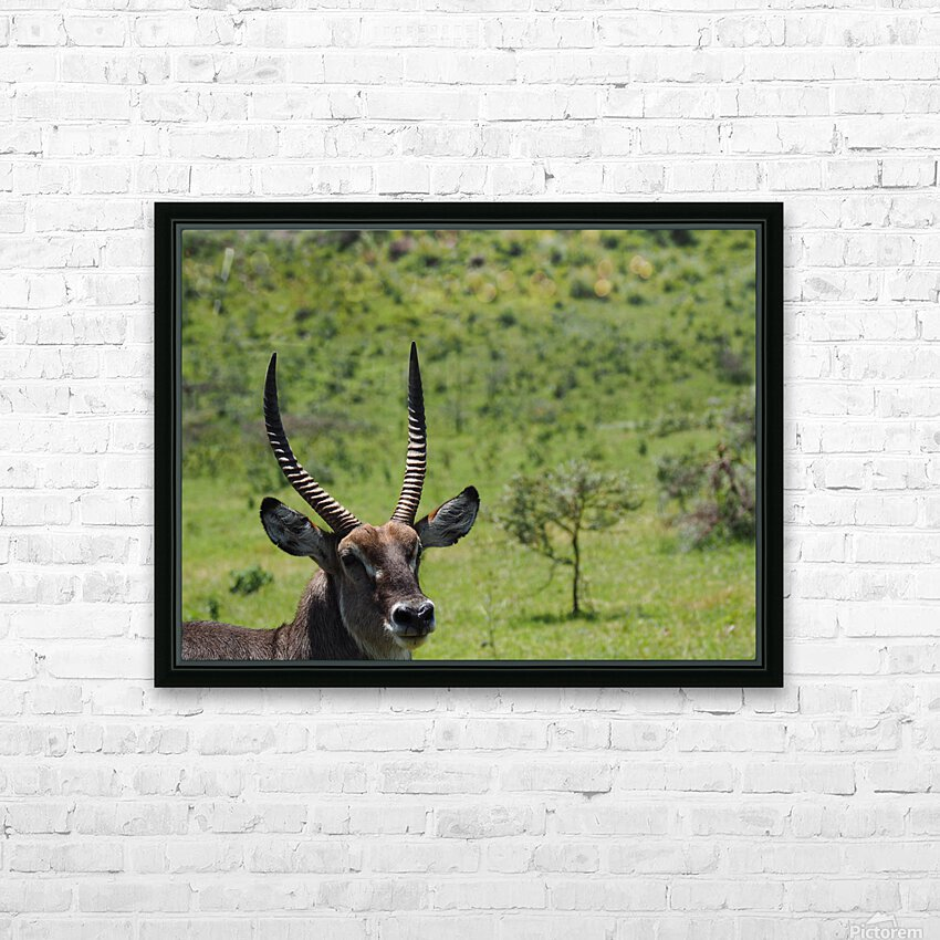 D8061889 B94D 4585 85A6 654F34B6CEB0 HD Sublimation Metal print with Decorating Float Frame (BOX)