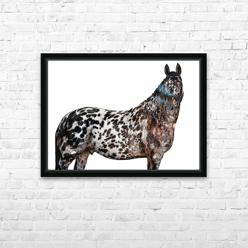 Spotted Horse Portrait HD Sublimation Metal print with Decorating Float Frame (BOX)