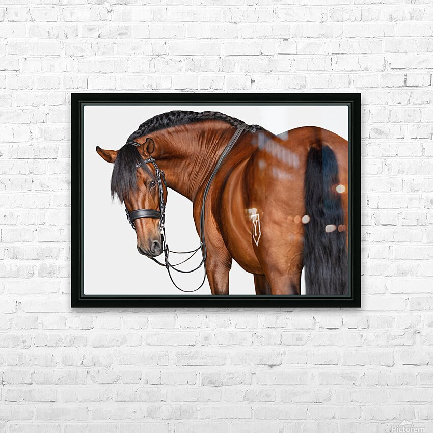 Bay Horse Portrait HD Sublimation Metal print with Decorating Float Frame (BOX)