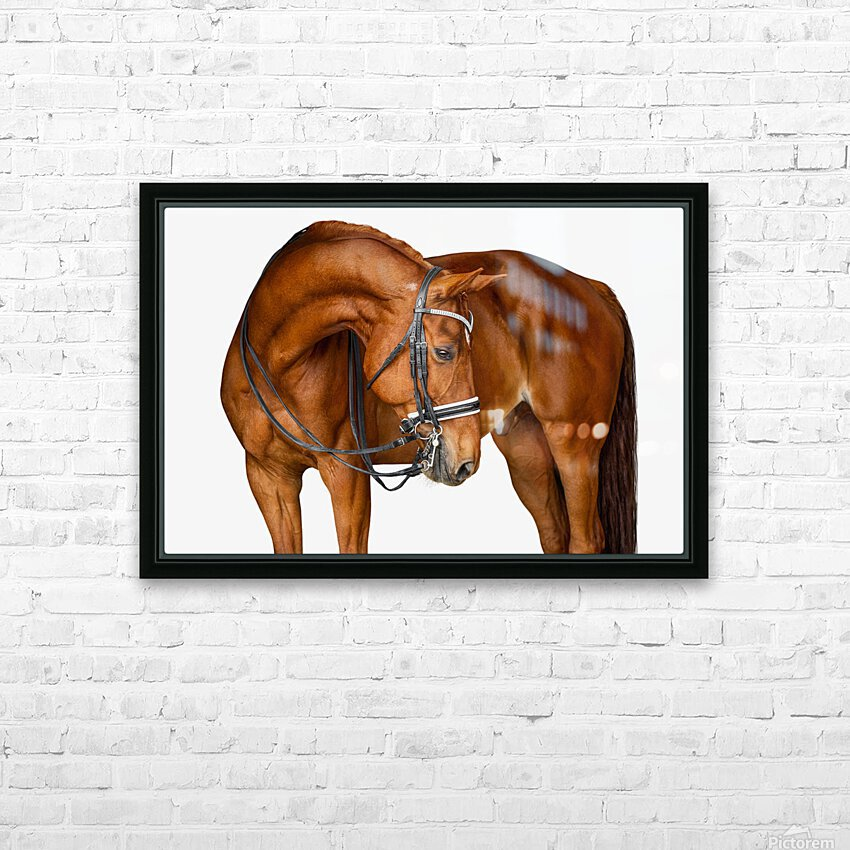 Chestnut Horse Portrait HD Sublimation Metal print with Decorating Float Frame (BOX)