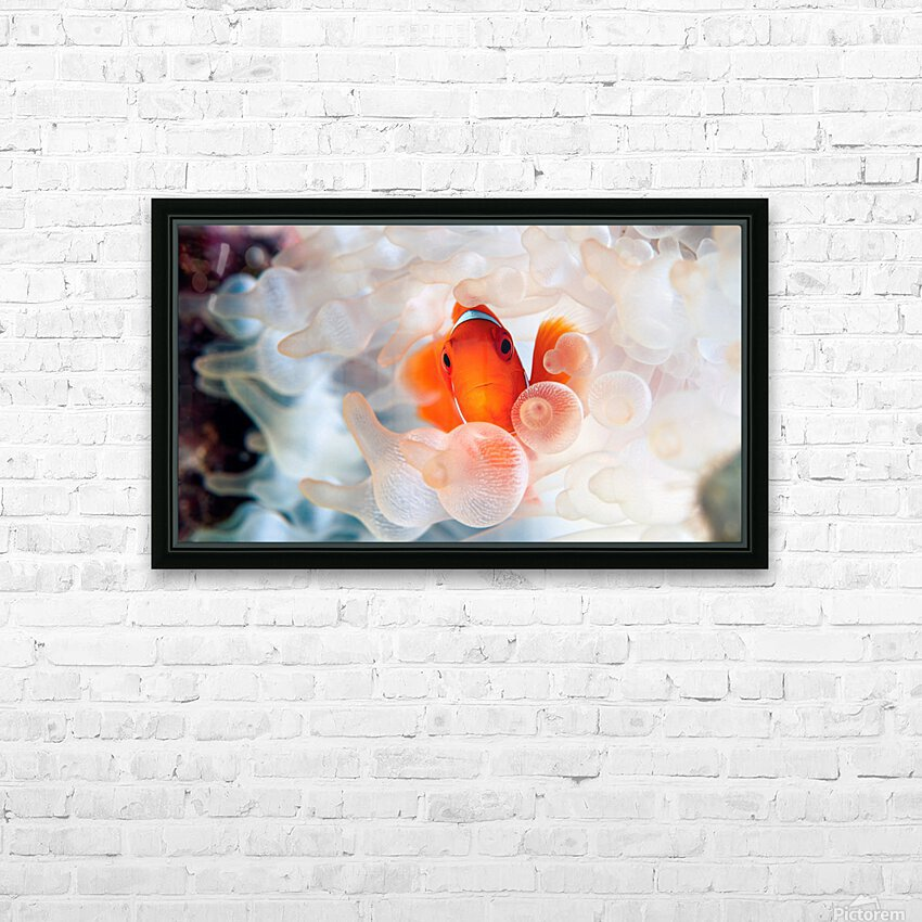 Peek A Boo HD Sublimation Metal print with Decorating Float Frame (BOX)