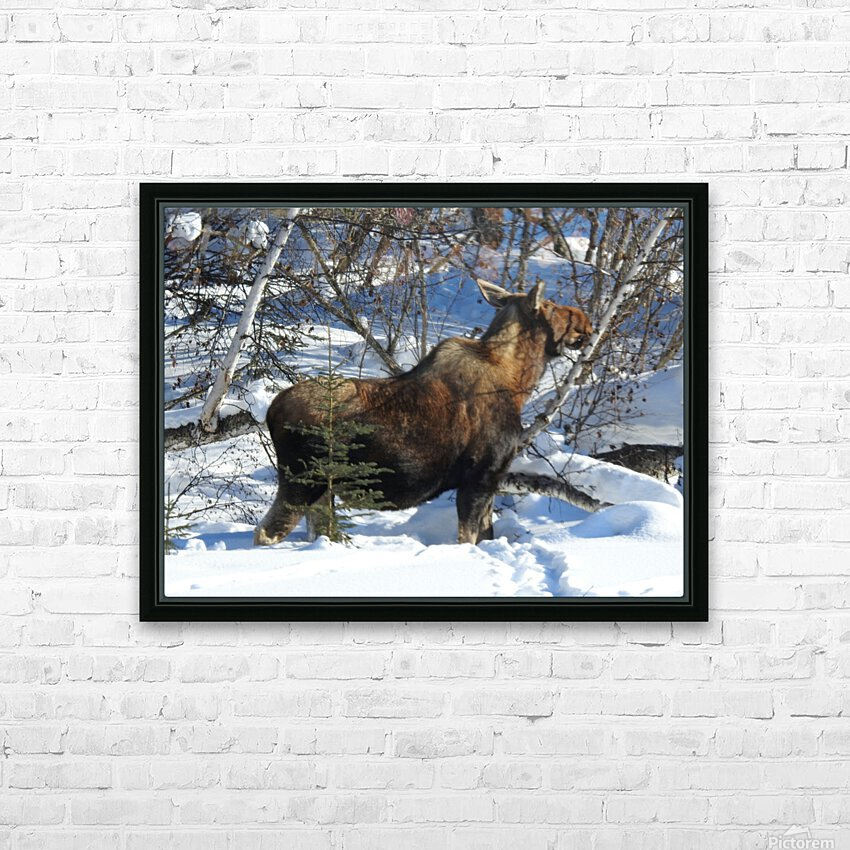 Hungry Moose HD Sublimation Metal print with Decorating Float Frame (BOX)