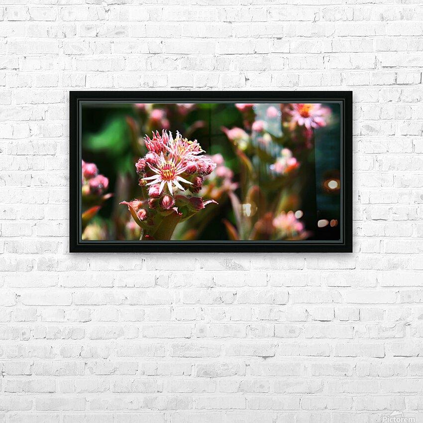 Sempervivum HD Sublimation Metal print with Decorating Float Frame (BOX)