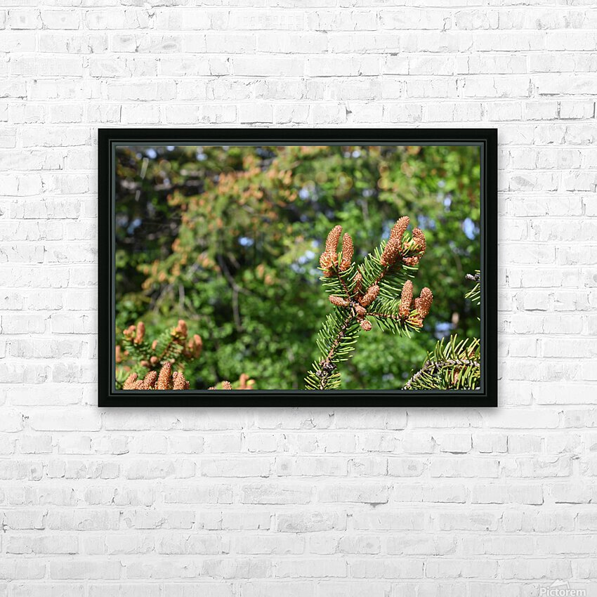 Spruce twig and background HD Sublimation Metal print with Decorating Float Frame (BOX)