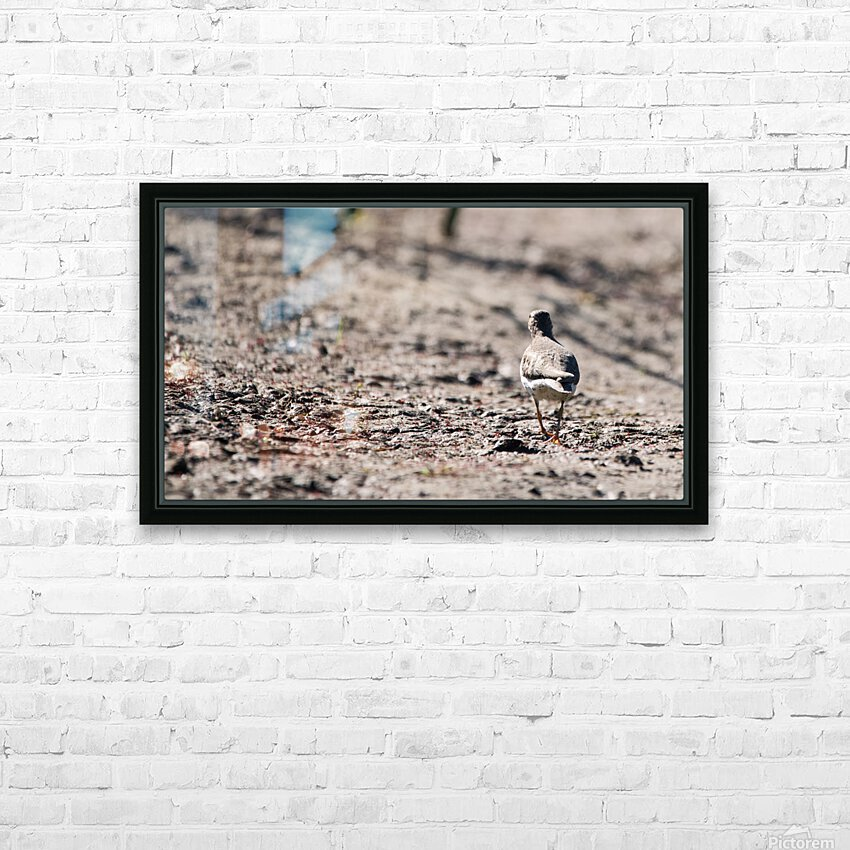 Lonely Sandpiper HD Sublimation Metal print with Decorating Float Frame (BOX)