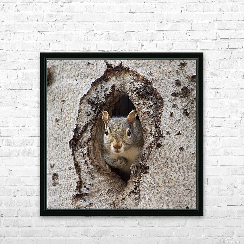 Squirrel in tree hole HD Sublimation Metal print with Decorating Float Frame (BOX)