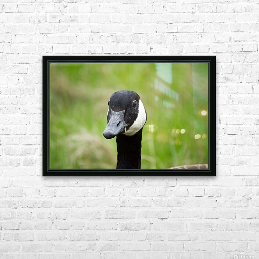 Toothpick Goose HD Sublimation Metal print with Decorating Float Frame (BOX)