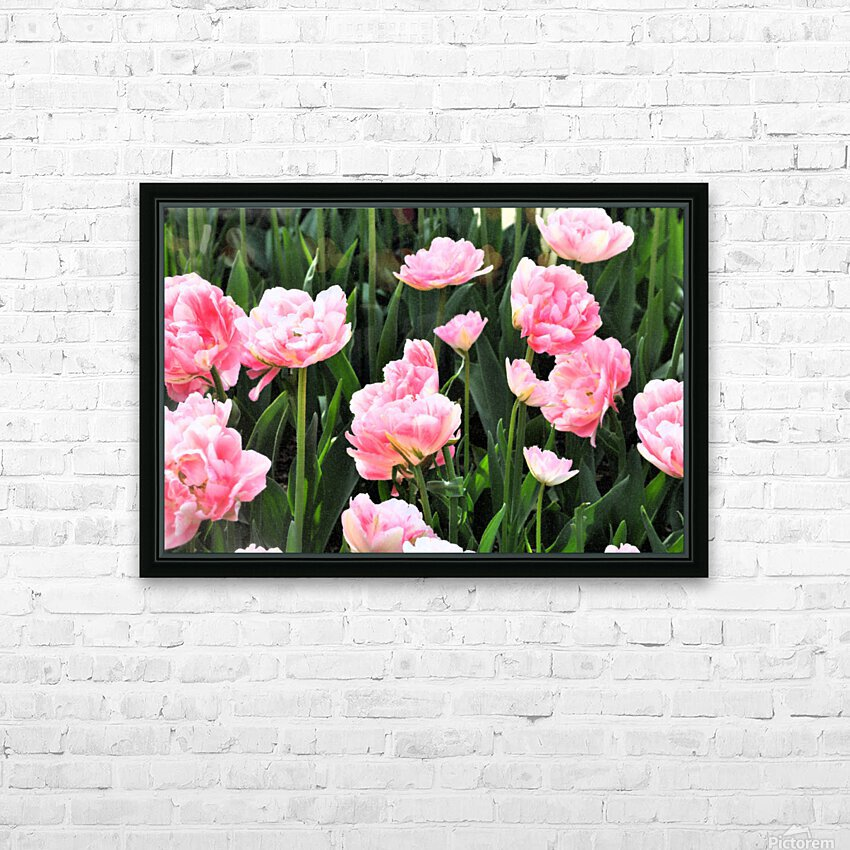 Double Pink Tulips HD Sublimation Metal print with Decorating Float Frame (BOX)