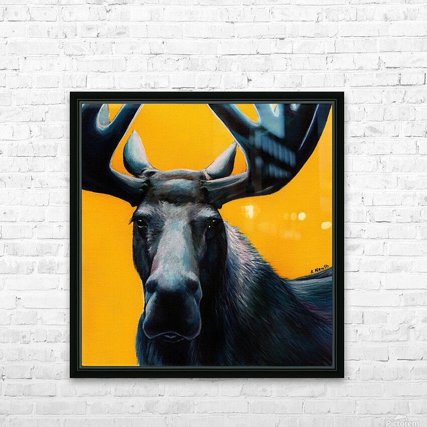 Moose HD Sublimation Metal print with Decorating Float Frame (BOX)