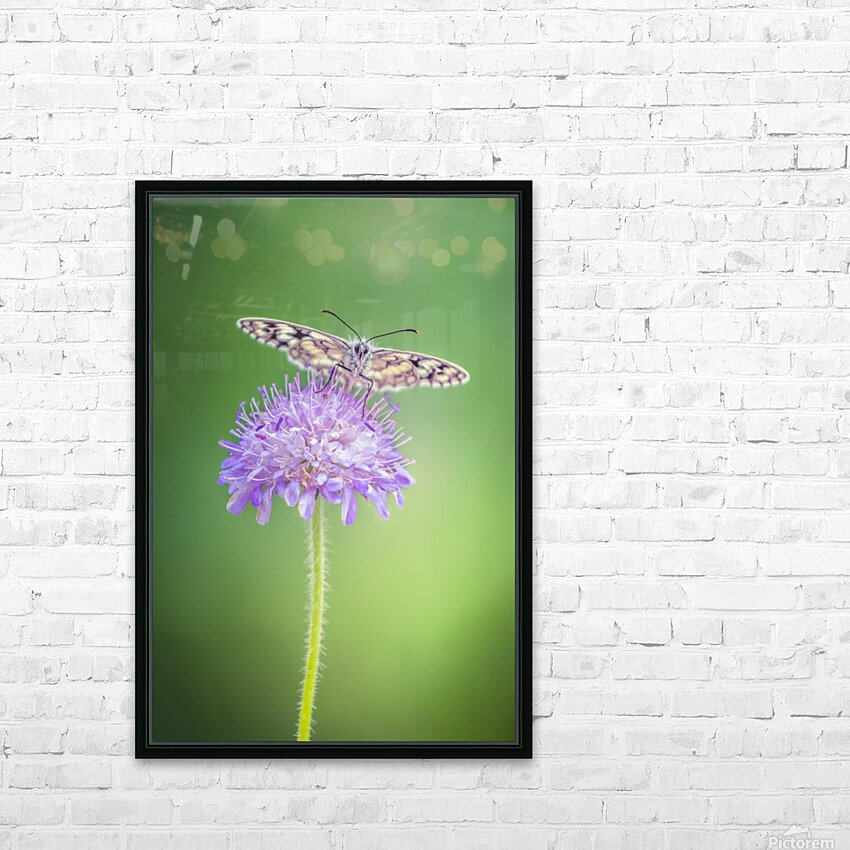 Butterfly HD Sublimation Metal print with Decorating Float Frame (BOX)