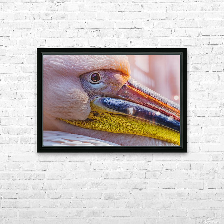 Pelican portrait HD Sublimation Metal print with Decorating Float Frame (BOX)