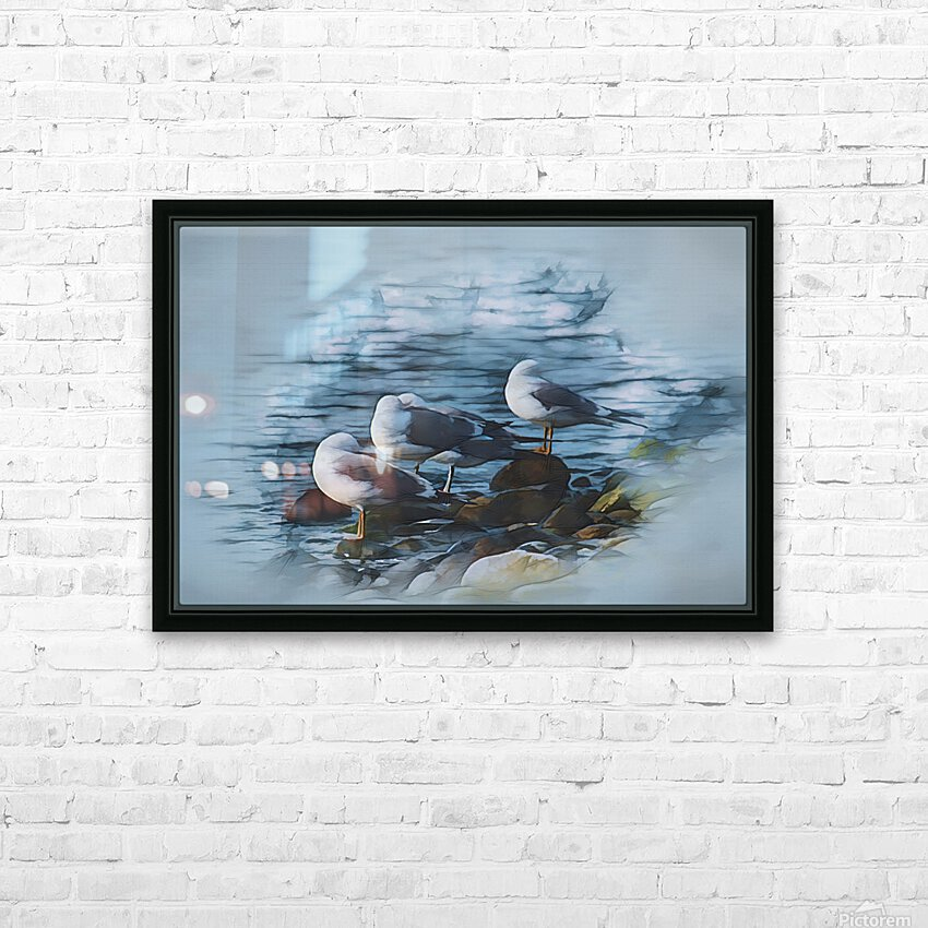 Preening Gulls HD Sublimation Metal print with Decorating Float Frame (BOX)