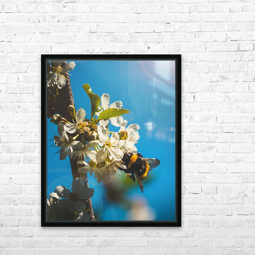 Bumble Cherry HD Sublimation Metal print with Decorating Float Frame (BOX)