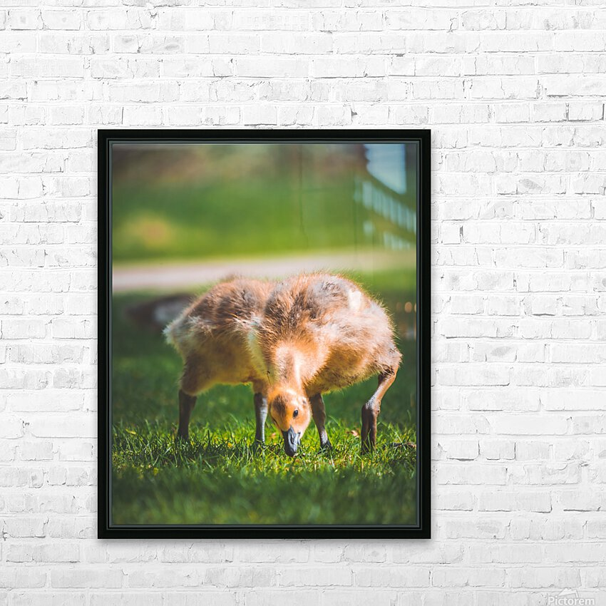 Gooses  HD Sublimation Metal print with Decorating Float Frame (BOX)