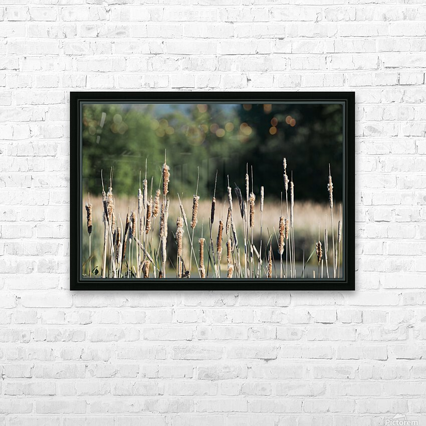 Cat Tails in Spring HD Sublimation Metal print with Decorating Float Frame (BOX)