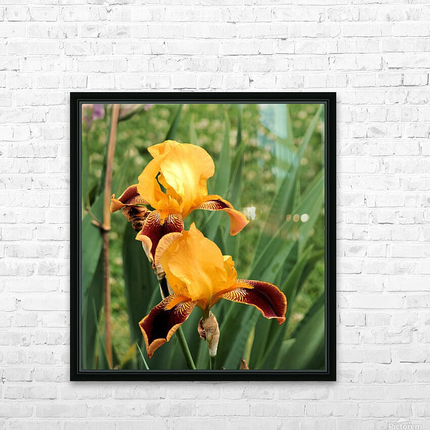 Yellow Brown Iris HD Sublimation Metal print with Decorating Float Frame (BOX)