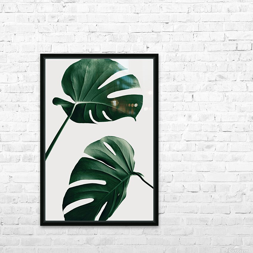 Monstera Natural 46 HD Sublimation Metal print with Decorating Float Frame (BOX)
