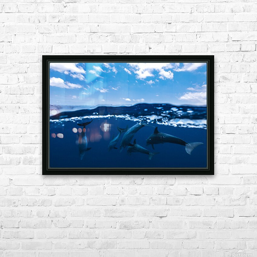 Between air and water with the dolphins HD Sublimation Metal print with Decorating Float Frame (BOX)