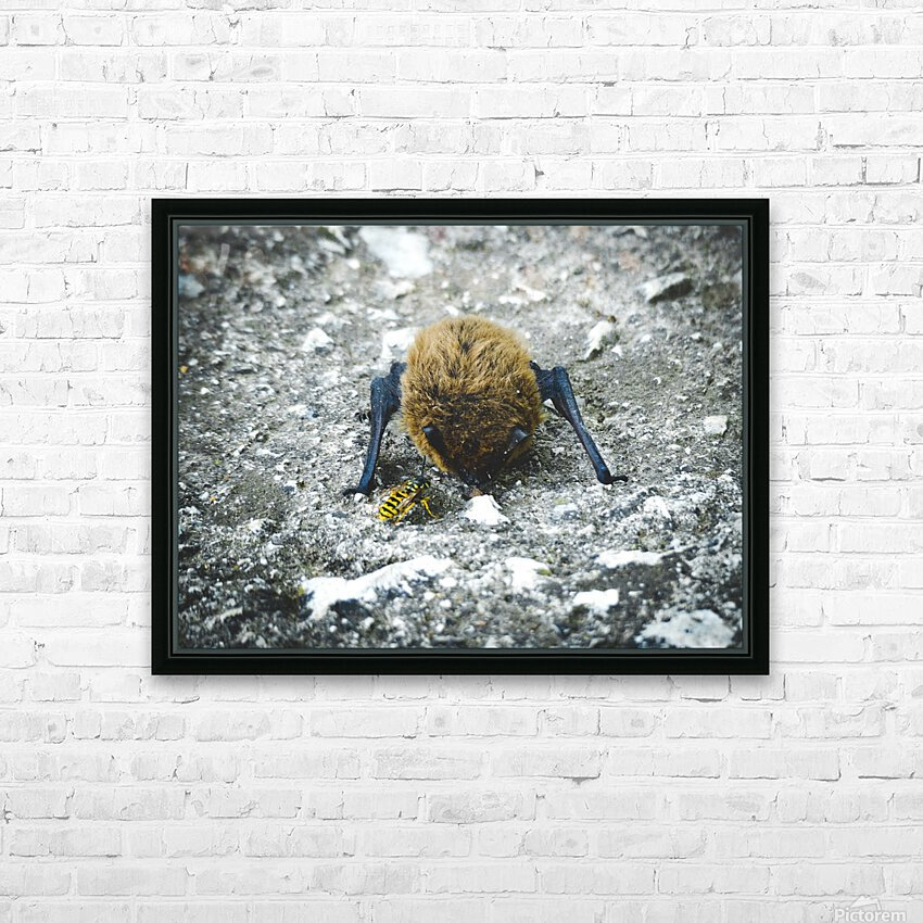 When a baby bat meets a bee. HD Sublimation Metal print with Decorating Float Frame (BOX)