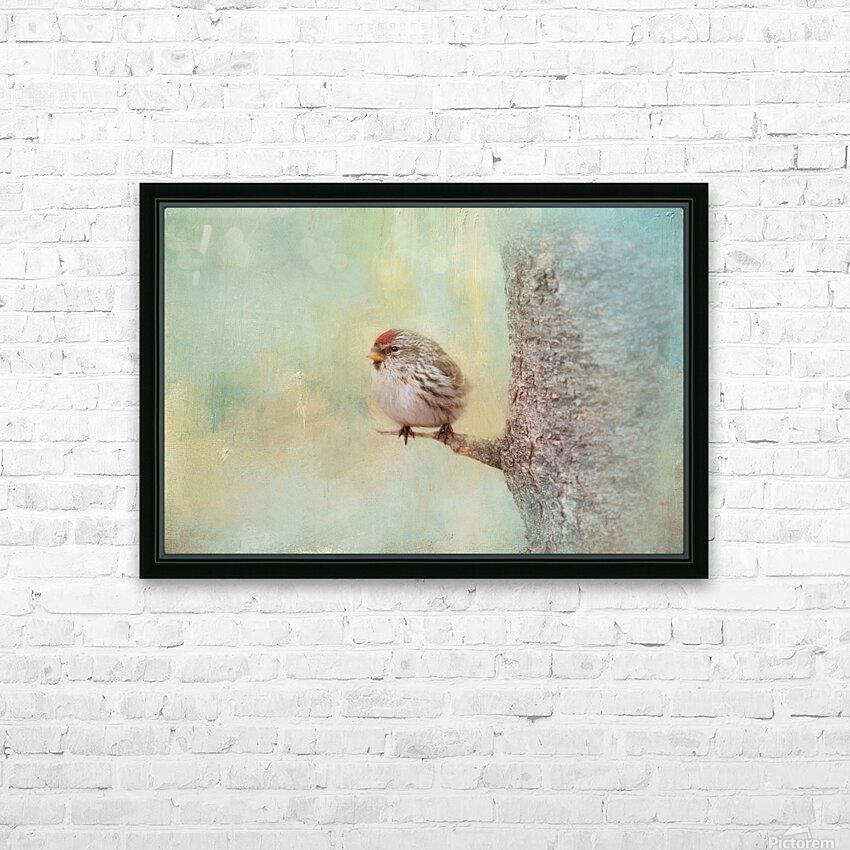 Common Redpoll HD Sublimation Metal print with Decorating Float Frame (BOX)