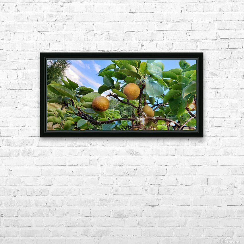 Asian Pears HD Sublimation Metal print with Decorating Float Frame (BOX)