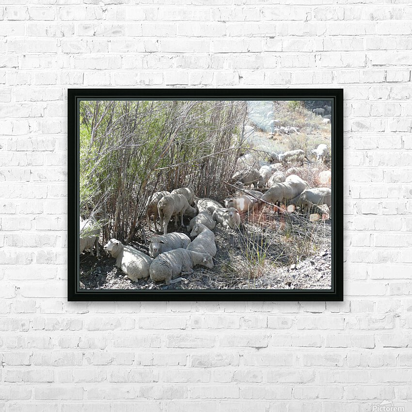 Sheep Huddle HD Sublimation Metal print with Decorating Float Frame (BOX)