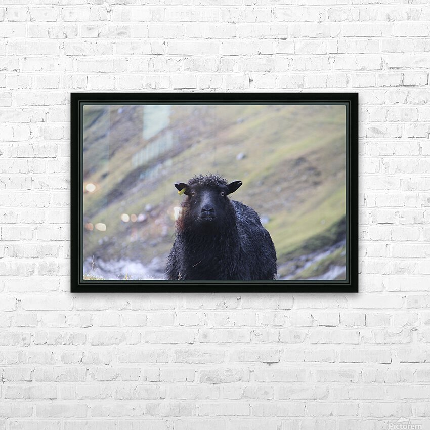 sheep HD Sublimation Metal print with Decorating Float Frame (BOX)