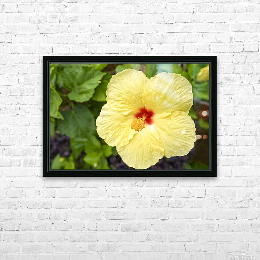Yellow Hibiscus Tropical Flower Hawaii HD Sublimation Metal print with Decorating Float Frame (BOX)