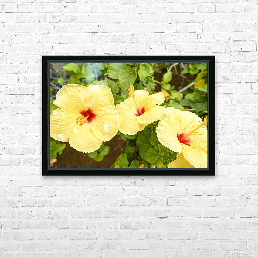Hibiscus Trio   Tropical Flowers Hawaii HD Sublimation Metal print with Decorating Float Frame (BOX)