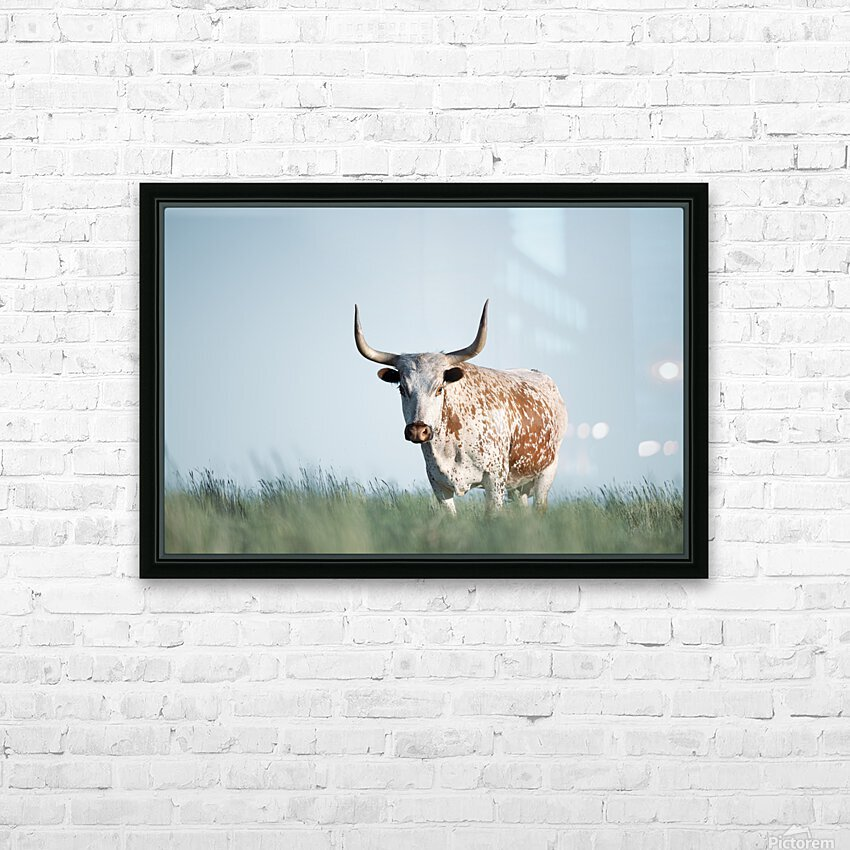 No Bull  HD Sublimation Metal print with Decorating Float Frame (BOX)