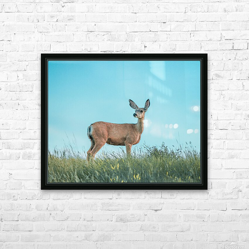 Doe  HD Sublimation Metal print with Decorating Float Frame (BOX)