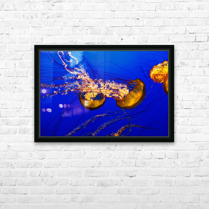 Monterey Jellyfish HD Sublimation Metal print with Decorating Float Frame (BOX)