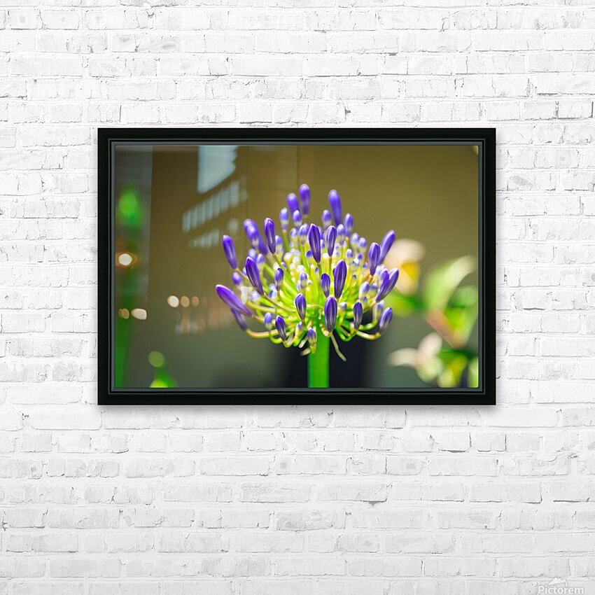 Agapanthus HD Sublimation Metal print with Decorating Float Frame (BOX)