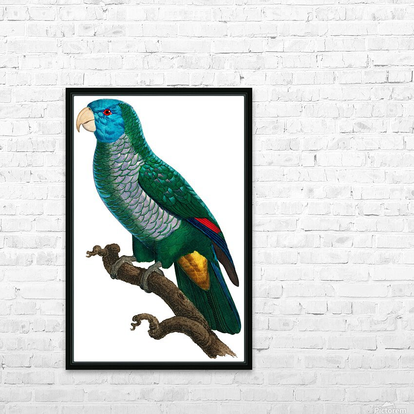 Yellow and Green Parrot Art Print Digital Download Vintage French Bird Illustration Printable Coastal Tropical Wall Art HD Sublimation Metal print with Decorating Float Frame (BOX)