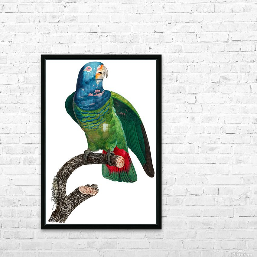 Parrot Print Antique Space Painting Vintage Drawing Poster Wall Art vintage animal parrot photo Tropical Parrot Art  HD Sublimation Metal print with Decorating Float Frame (BOX)