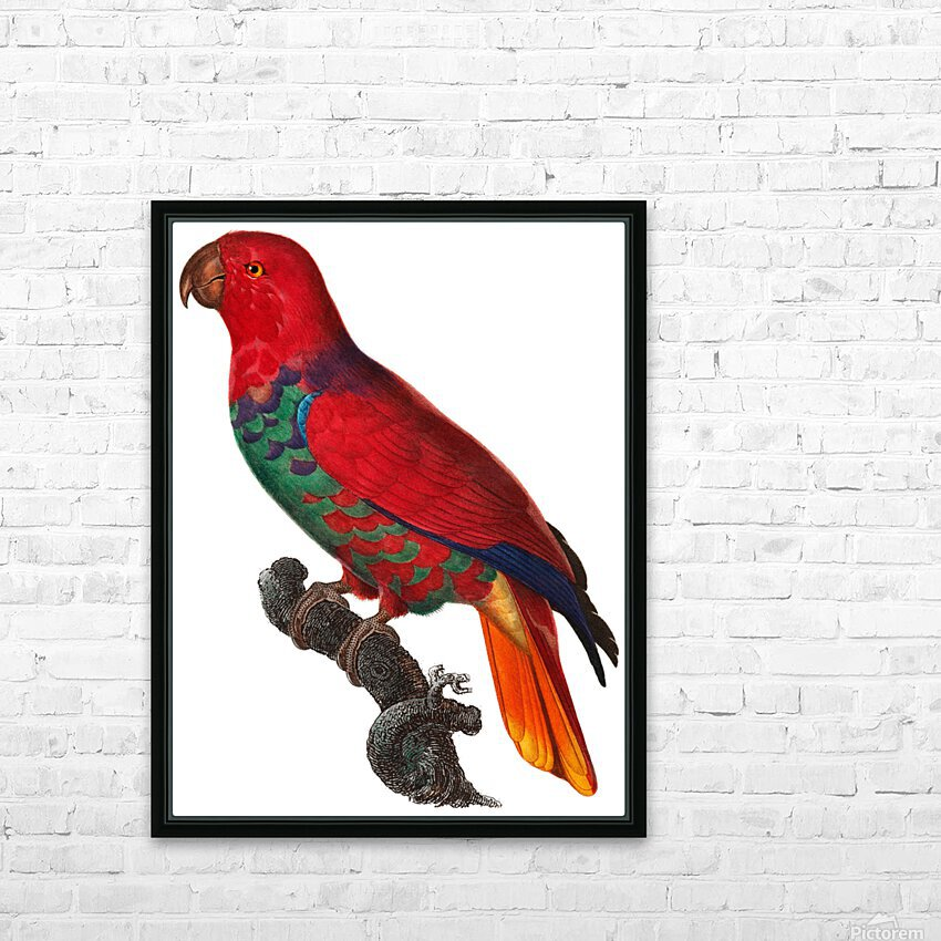 Parrot Print Antique Space Painting Vintage Drawing Poster Wall Art Eclectus Parrot Vintage parrot print Parrot Poster Print  HD Sublimation Metal print with Decorating Float Frame (BOX)